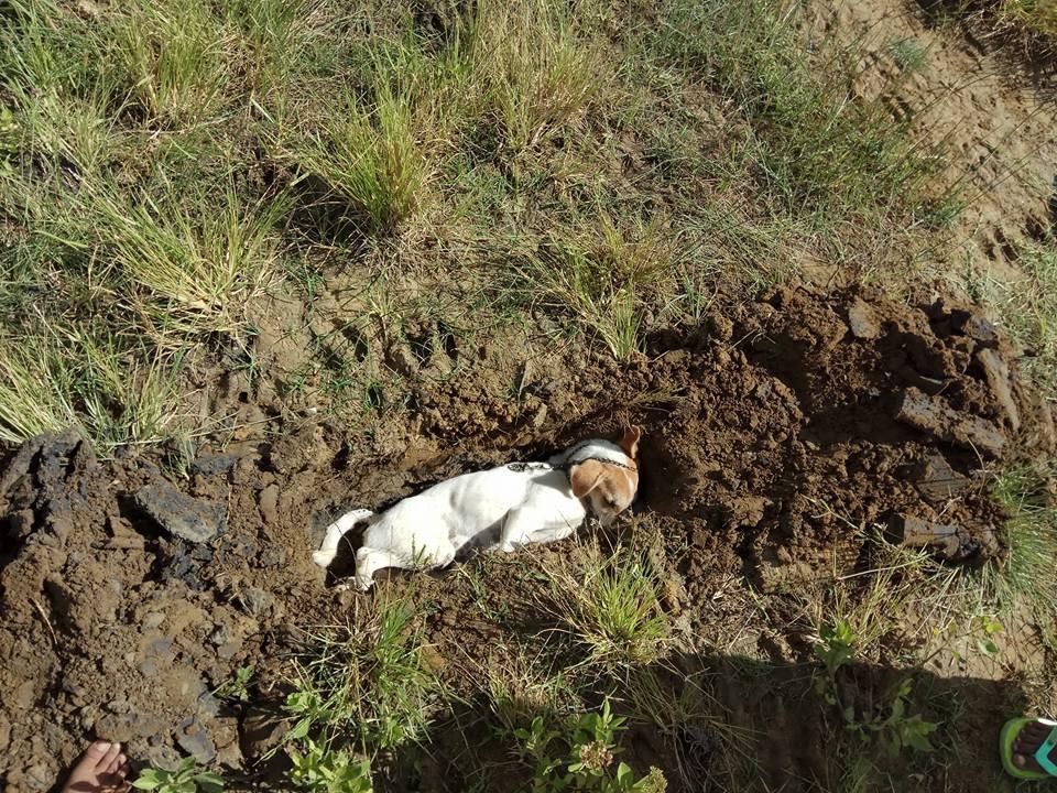 Anjing setia yang mengorbankan nyawa dikubur di lingkungan yang dia jaga (Sumber: facebook Achy Wijaya)